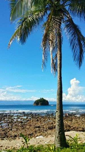 Travel Travelphotography Sea And Sky Blue Sky Sea Tree Outdoors Baler Eyeem Philippines More Fun In The Philippines