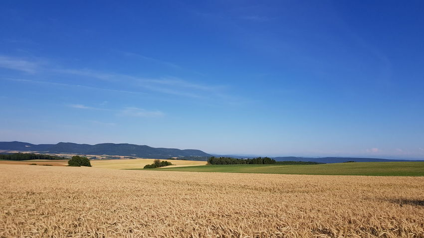 Agriculture Blue Field Rural Scene No People Cloud - Sky Outdoors Sky Landscape Day Food Mountain Cereal Plant Nature Scenics Freshness UneditedNature,Perfectand Fresh Schwarzwald