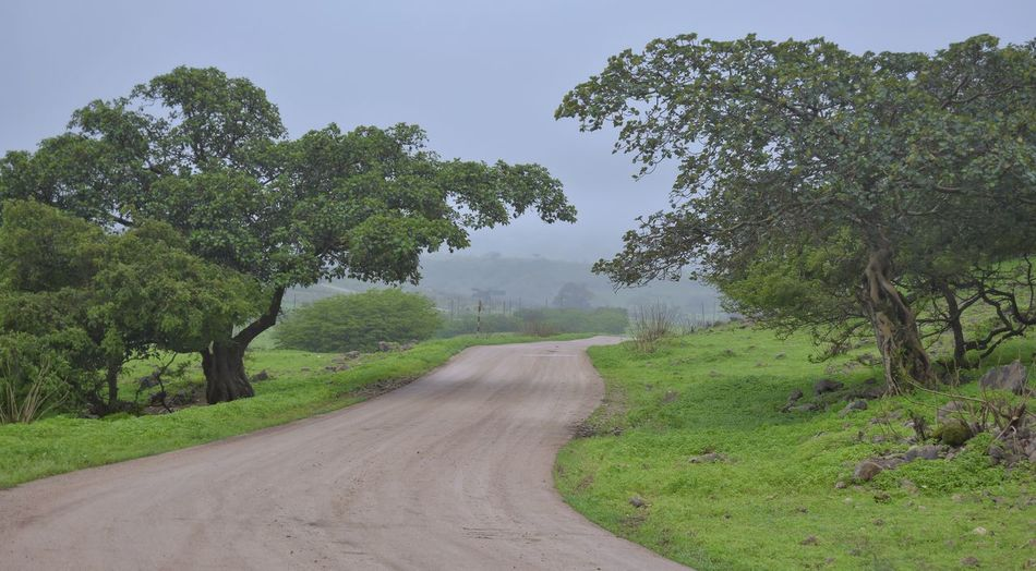 Tree Nature Landscape Outdoors Green Color No People Beauty In Nature Simplicity Travel Happy New Year Best Of 2016 EyeEm EyeEm Nature Lover Beauty In Nature Salalah Oman Road Day
