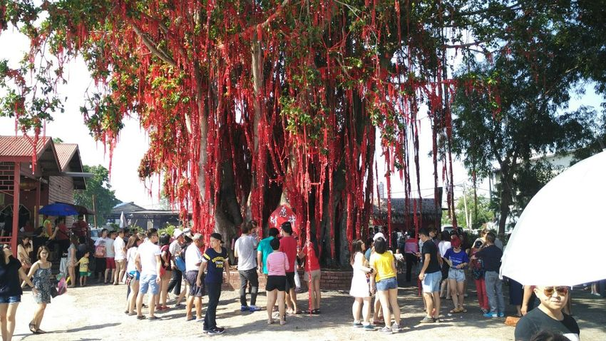 Wishing Tree Color Of Life Colour Of Life Red Ribbon Wish Wishes Make A Wish Lucky Charm Tree Sekinchan Sekinchan, Malaysia Tourist Adapted To The City