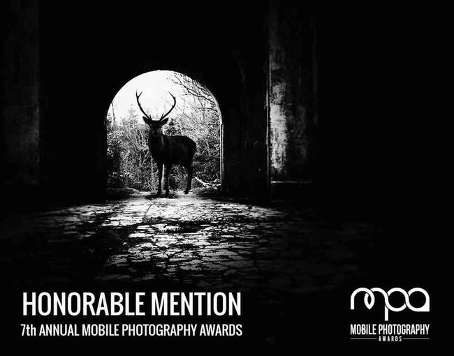 I am so thrilled to be awarded an honourable mention in this years ANNUAL MOBILE PHOTOGRAPHY AWARDS for my image The Stand off in the category The Darkness, thanks to all the judges and Daniel Berman for all their hard work. Congrats to all those who won or got mentioned. IPhoneography Mobliephotography EyeEm Nature Lover EyeEm Best Shots Shootermag Black & White Black And White Silhouette Wildlife Photography Blackandwhite