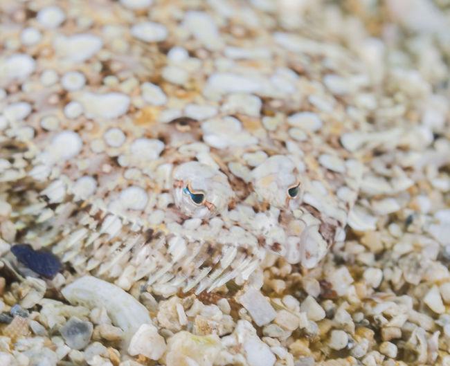 High angle view of crab on pebbles