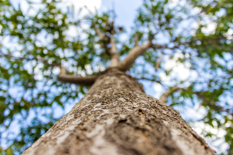 Bark Beauty In Nature Branch Close-up Day Directly Below Full Frame Green Growth Low Angle View Nature Scenics Selective Focus Sky Summer Tall Tall - High Tranquil Scene Tranquility Tree Tree Trunk