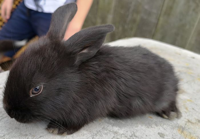 EyeEm Selects Pets Portrait Black Color Close-up