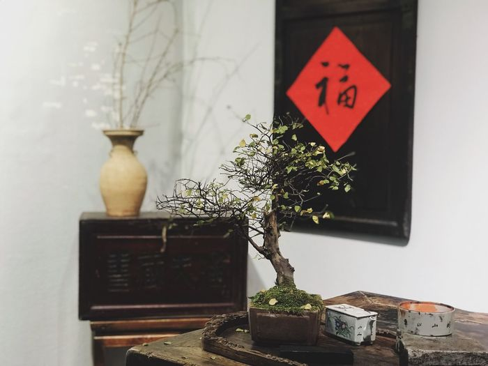 Chinese New Year Chinese Culture Still Life Plant Potted Plant Text Indoors  Table Bonsai Tree Close-up Decoration