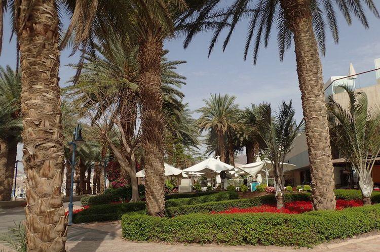 Hotels Area Eilat Palm Tree Israel Travel Destinations Outdoors No People Promenade