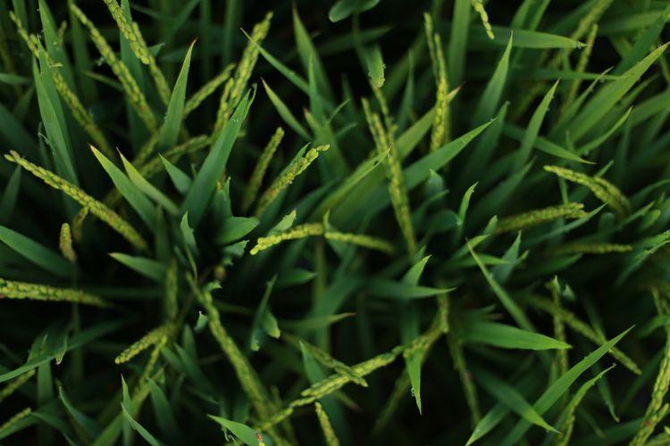 Full Frame Shot Of Grass Growing Outdoors