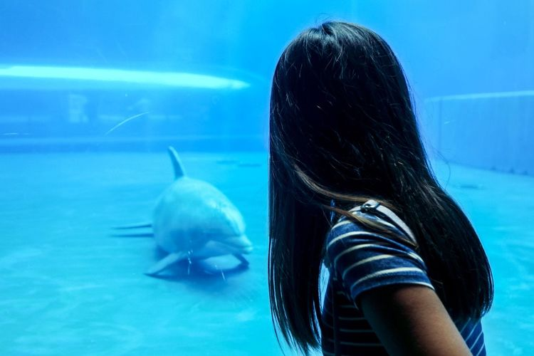 Side view of woman looking at dolphin swimming in aquarium