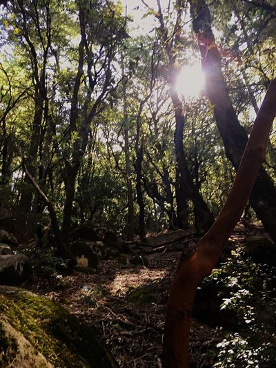 EyeEm Nature Lover EyeEm Best Shots Sky Landscape Branch Growth No People Day Scenics Beauty In Nature Tranquil Scene Outdoors Tranquility Sunlight Forest Tree Trunk Nature Tree Sunbeam Hiking Golden California Norcal EyeEmNewHere EyeEm Ready