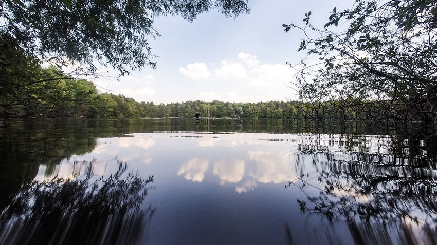 Brandenburg Liepnitzsee Taucher Trzoska Beauty In Nature Day Diver Forest Lake Nature Outdoors Reflection See Sky Tranquil Scene Tree Waldsee Water