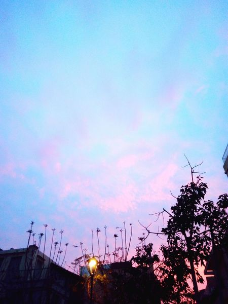 Sky Blue Sky With Clouds Beauty In Nature Blue And Pink Sky And Trees In The City No People Outdoors Nature Low Angle View Tree Sunset Day