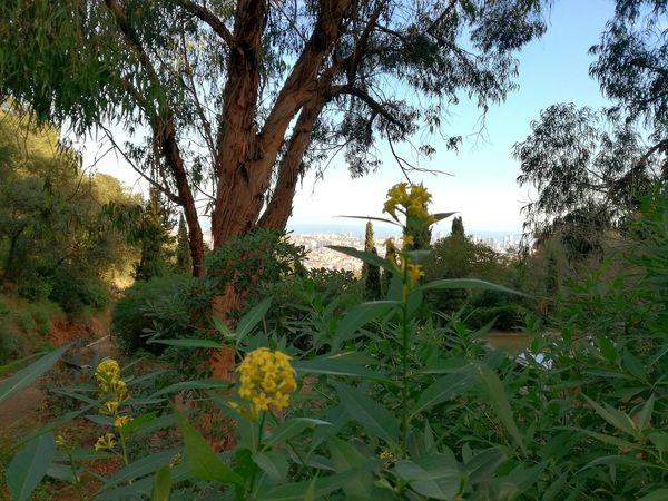 Nature Photography No People Freshness Nature Outdoors Barcelona BCN Barcelona Park Day Beauty In Nature Flowers Lost In The Landscape