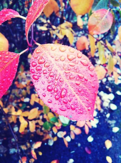 Leaf Autumn Waterdrops