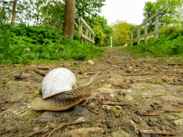 Learn & Shoot: Balancing Elements Snail Snailshell Snail Collection Way Of Life Way To Go Home Nature On Your Doorstep Perspective Photography Perspectives Naturelovers Nature No People Details Of Nature Nature_collection Nature Photography Taking Photos Perspective A Moment Of Zen A Moment Of Zen... From My Point Of View