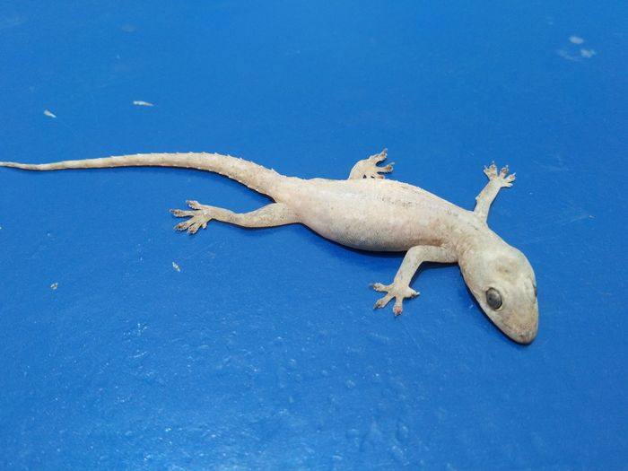 High angle view of lizard on shore