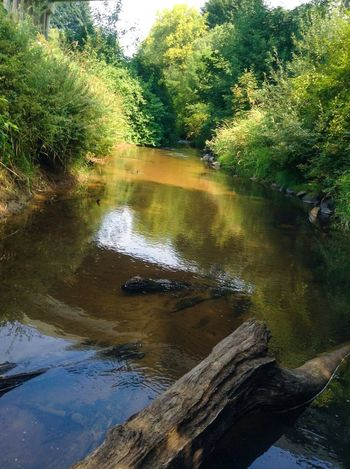 The Long Tom River... Not very exciting... Mucky, but it's full of crawdads. Lord give me some subjects!!!!! Stream Creek