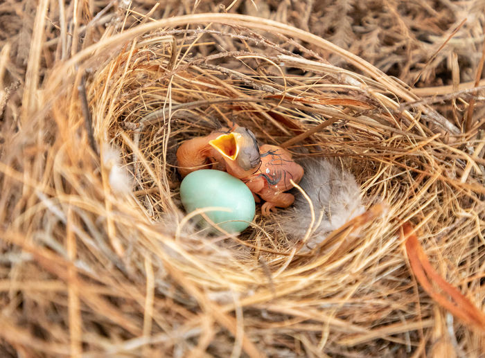 High angle view of bird in nest