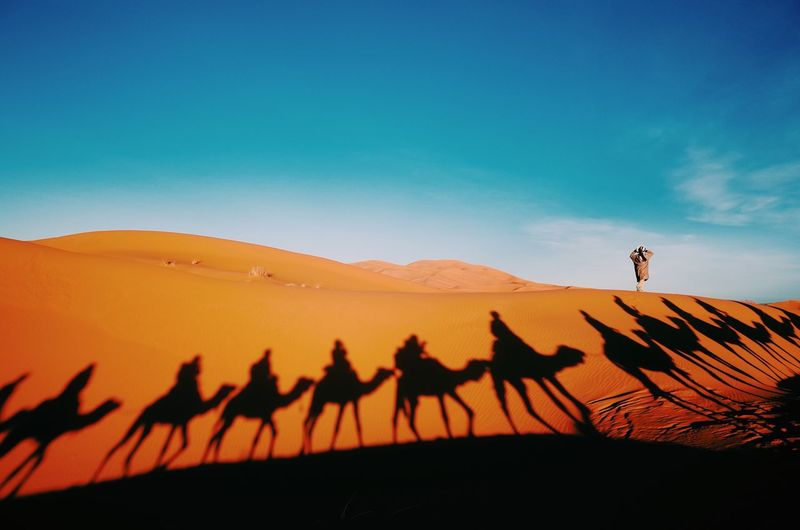 Nature Beauty In Nature Landscape Real People Growth Outdoors Clear Sky Tranquility Day Scenics Men Sky One Person Camel Sand Desert Sunset Light And Shadow Shadow
