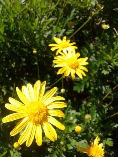 Eyemnaturelover Taking Photos Flowers Flowrt Adventures Beyond The Ultraworld Likeforlike EyeEm Nature Lover