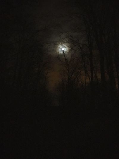 Dark Tranquility Nature Bare Tree Night Moon Beauty In Nature Tranquil Scene Tree Scenics No People Silhouette Landscape Outdoors Astronomy Sky