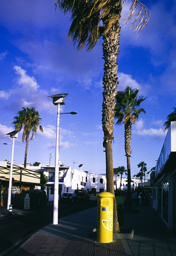 Palm trees on street against blue sky