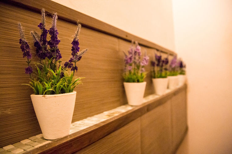Flower pots arranged by wall at home