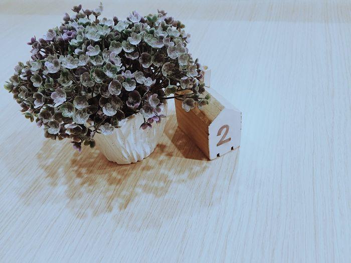 Table Close-up Floral Wooden Plant Organic Decoration Decor Flower Pots Flower Portrait