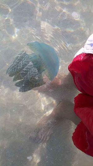 Jelly fish sea beach wash ashore Close-up