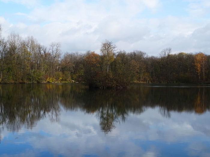 Reflection Tree