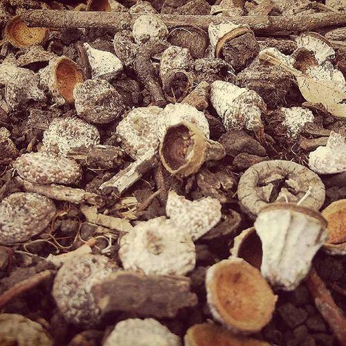 Autumn Wmm_brown Nature