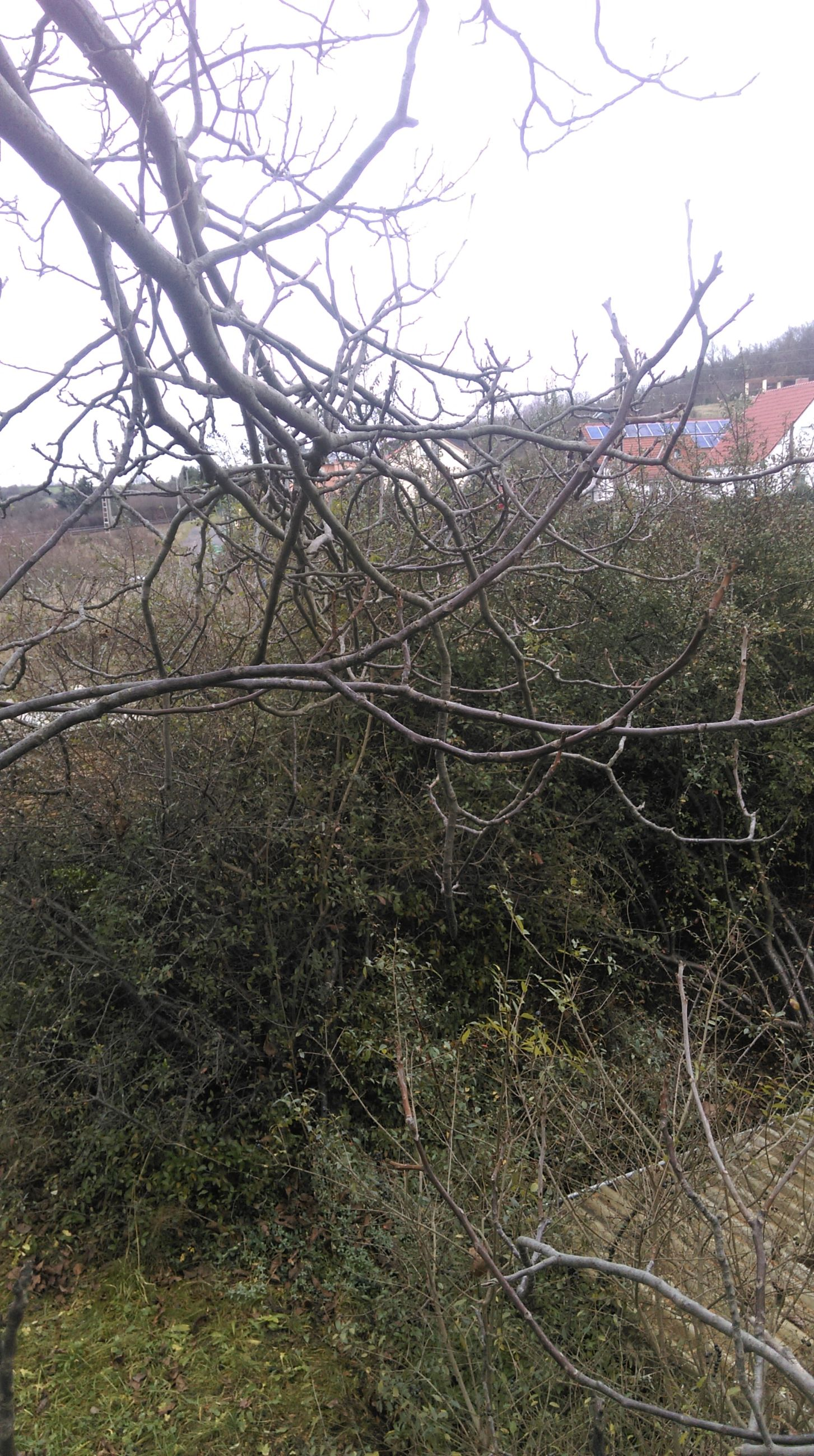 bare tree, branch, tranquility, tree, grass, field, nature, tranquil scene, landscape, growth, sky, clear sky, scenics, beauty in nature, plant, non-urban scene, outdoors, dry, day, no people