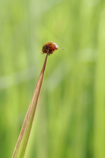 One Animal Insect Animals In The Wild Animal Wildlife Animal Themes Nature Plant Green Color No People Close-up Day Outdoors Fragility Beauty In Nature Flower Grass Freshness