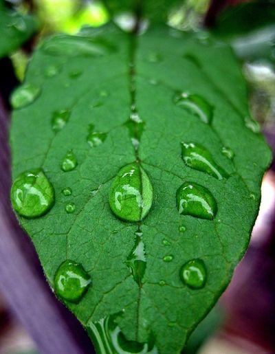 Garden EyeEm Nature Lover Beautiful Nature Raindrops After The Rain Leaf Green Macro