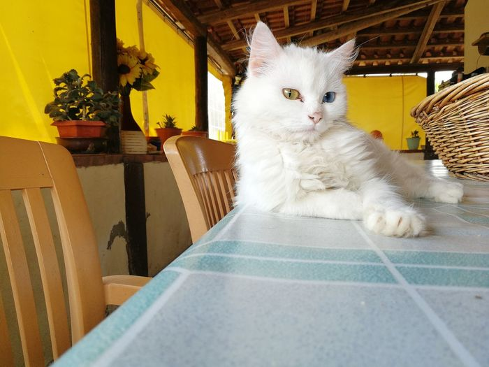Portrait of cat sitting on table