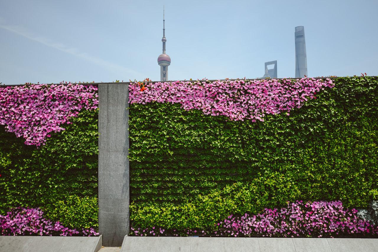 Flowers In City Against Sky