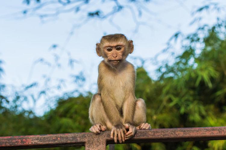 Lion sitting on railing against trees