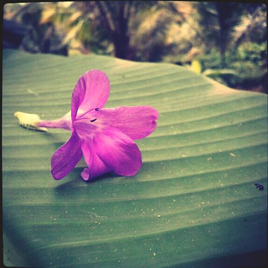 Flower Photography Flower Beautiful Nature Wind Banana Leaf Colors Garden Click Naturelover. Nature Eyeem Best Clicks.