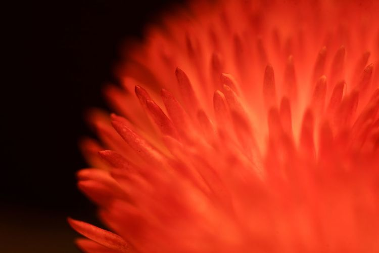 Macro Photography Beauty In Nature Bright Close-up Flower Flower Head Macro Pattern Petal Red