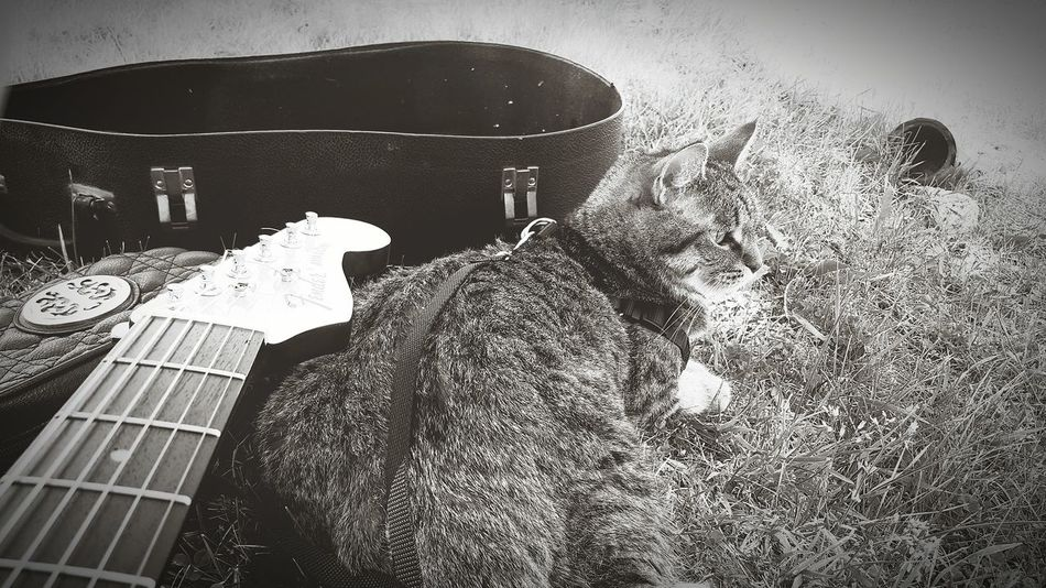 Hanging Out Taking Photos Outdoors Hello World Relaxing Enjoying Life Happy Kitty Travelling EyeEm Animal Lover Capo Rescuecat MyBoy Coco'sPics Blackandwhite Guitar Addiction Guitar Acoustic Fender Guitarcat Capokitty Cat