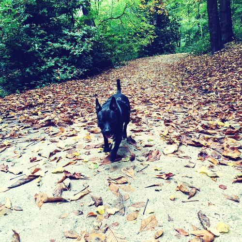 Wallsend Parks Nature Photography Dog Walking Local Nature Nature On Your Doorstep Richardson Dees Park Leaves_collection Leaves Autumn Leaves Patterdale #spotty Paws #patterdale #whippet Monkey Dog Iphone 6