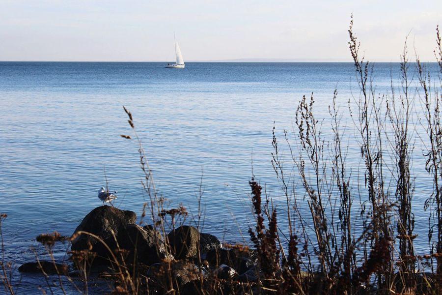 Sea Ocean Water Seaside Showcase: November