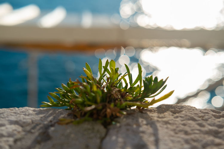Green plant overlooking clean seaside Nature Water Plant No People Beauty In Nature Sea Selective Focus Growth Close-up Rock - Object Rock Day Sky Sunlight Solid Focus On Foreground Green Color Outdoors Tranquility Seaside Seaside_collection Seaside Town Summertime Sustainable Resources Green Color Green Green Green!  Sun Light Sun Energy