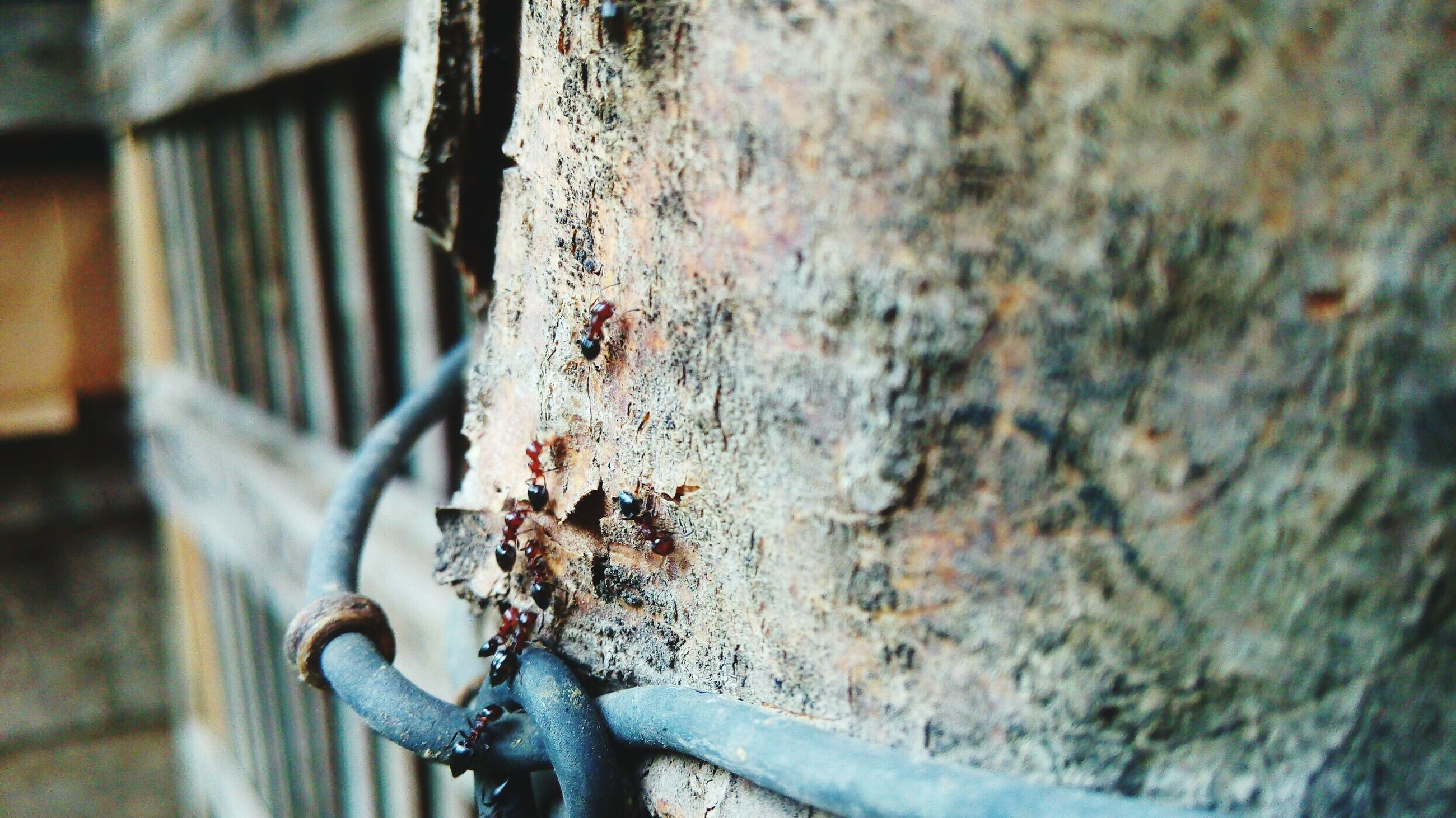 metal, focus on foreground, rusty, close-up, old, weathered, metallic, deterioration, damaged, wall - building feature, built structure, selective focus, abandoned, railing, chain, day, protection, fence, run-down, architecture