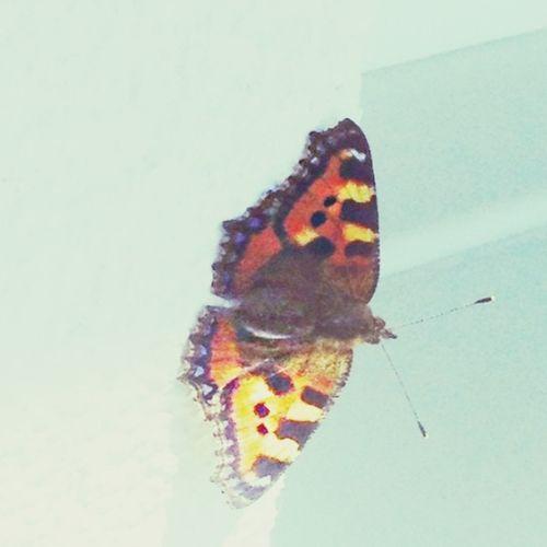 Butterfly ~~~