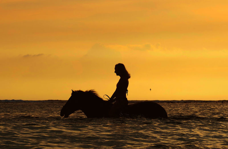 Side view of silhouette person riding horse in water against sky during sunset