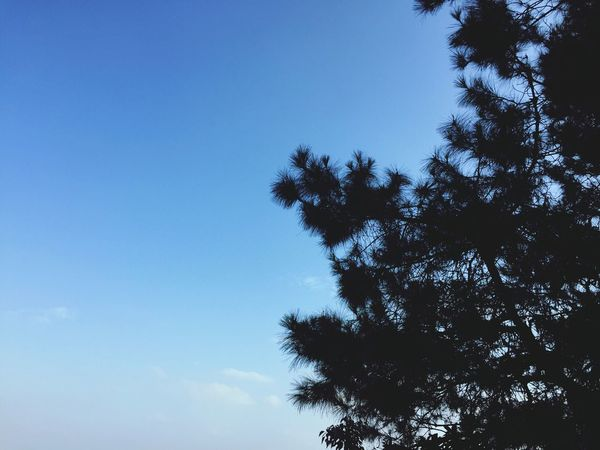 Blue Tree Sky Nature Clear Sky Beauty In Nature Outdoors Nature