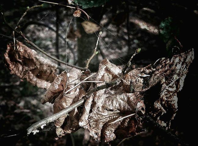Autumn Fugacity Macro Nature Spiderweb Macro Macro_collection Nature Naturelovers EyeEm Best Shots AntiM