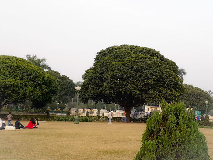 Trees in park against clear sky