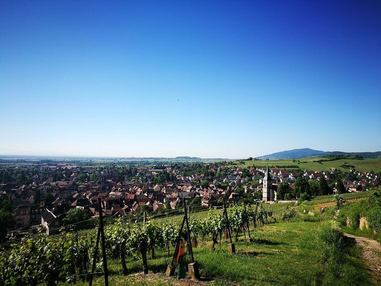 Agriculture Field Sky Nature Outdoors Beauty In Nature Peaceful View Huawei P9 Leica Beauty Vine Vineyard Vineyard Cultivation Vines And Leaf No People Vines On Trees Naturelover Alsace Life Alsace France Huaweiphotography Vinery Church Church Buildings