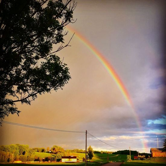 Rainbow Double Rainbow No People Tree Outdoors Multi Colored Sky Nature Day Beauty In Nature
